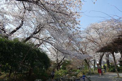 f:id:tachikawa-mac:20180328160710j:plain
