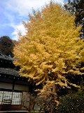 f:id:tadahitori315:20161115143256j:image