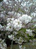 f:id:tadahitori315:20180414150641j:image