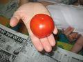 トマト初収穫-2