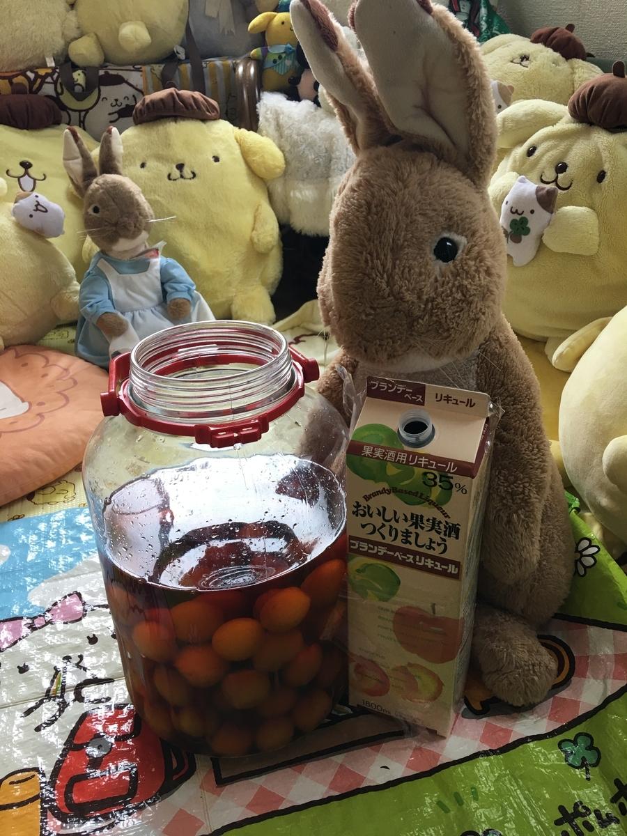 亀戸天神の梅で梅酒を造る2