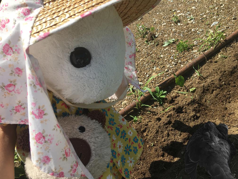 うさ次郎が畑で動かないハトさんを発見