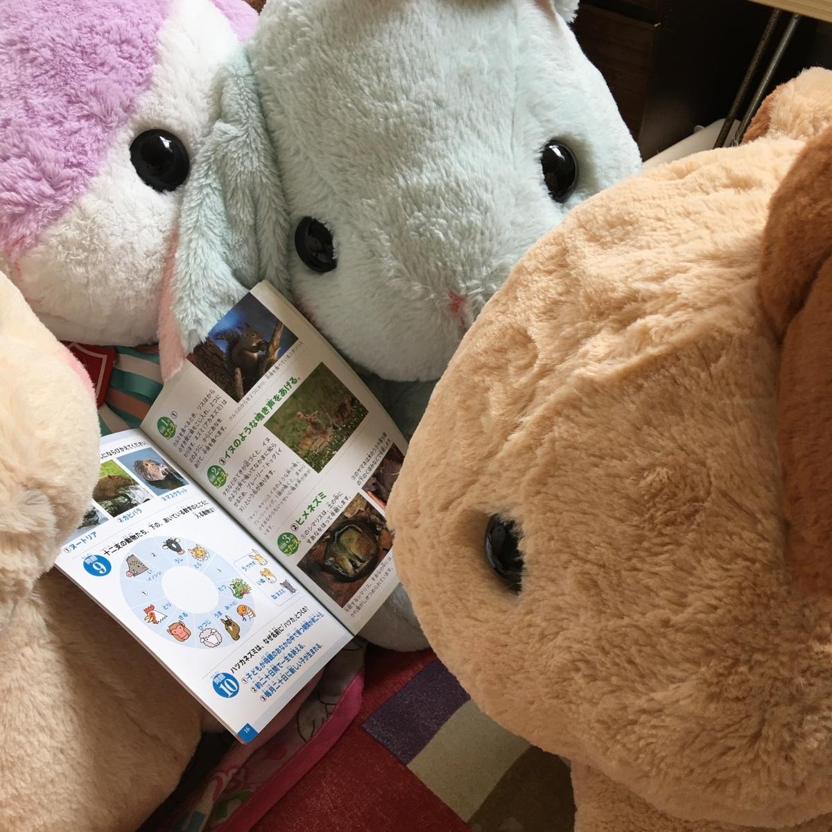 みんなでナキウサギの図鑑をみている様子