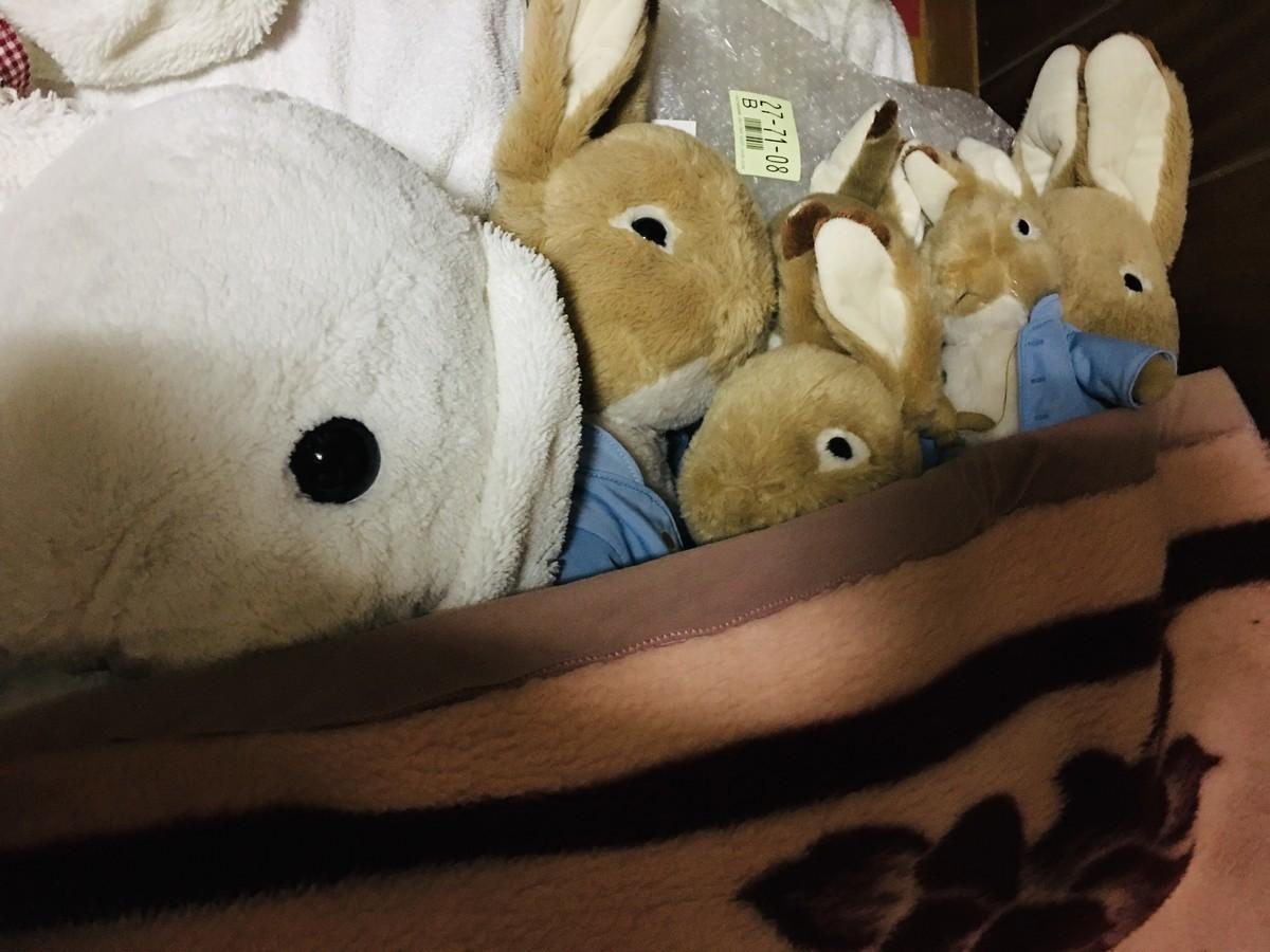 夜はお布団で寝ます