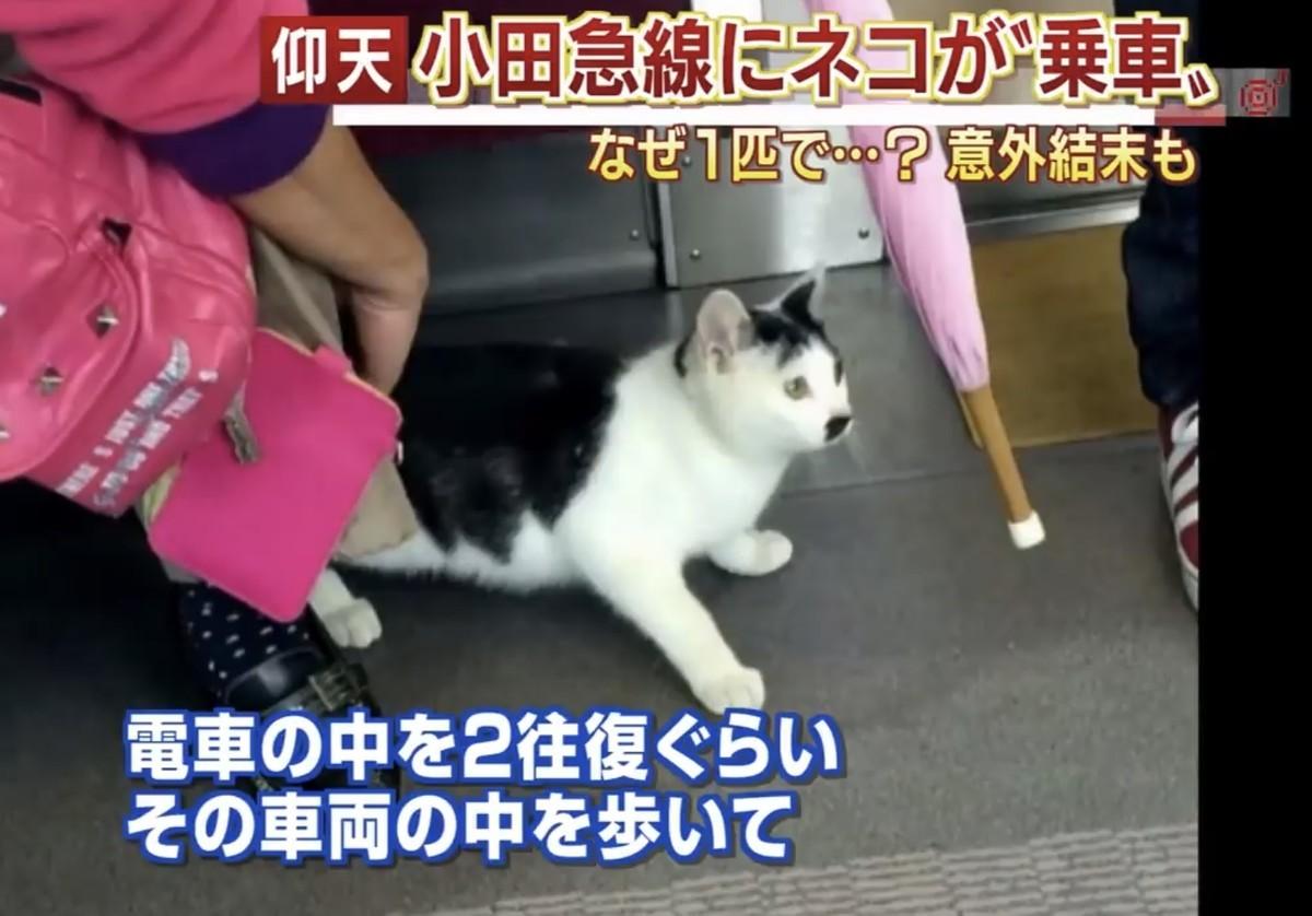 小田急線に乗った猫の画像