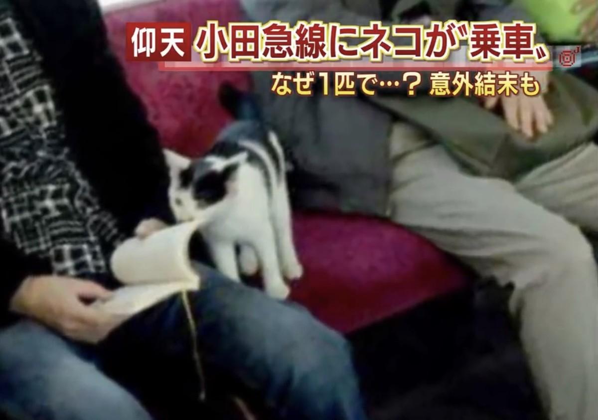 小田急線に乗った猫の結末