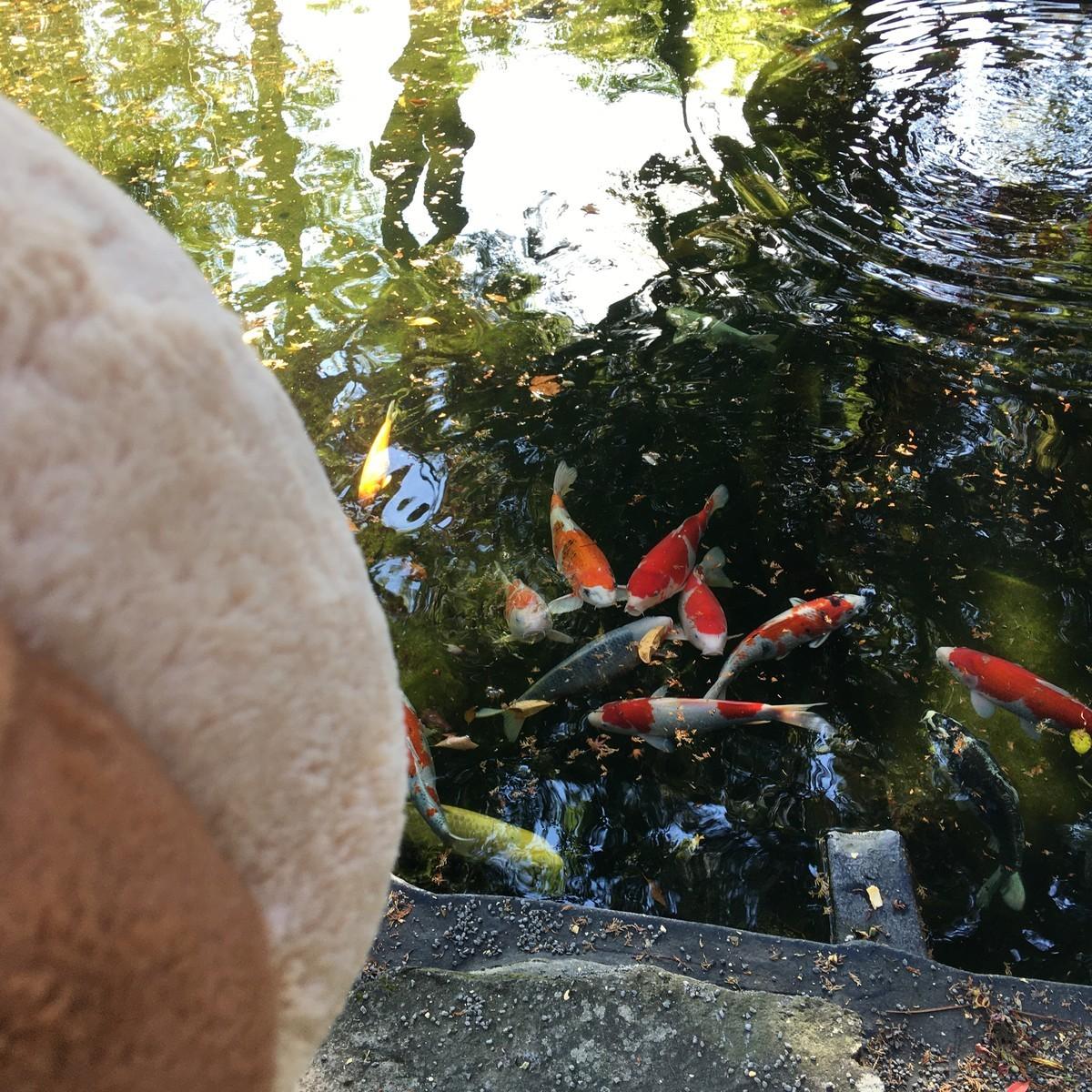 餌をあげたらたくさんのお魚が・・・
