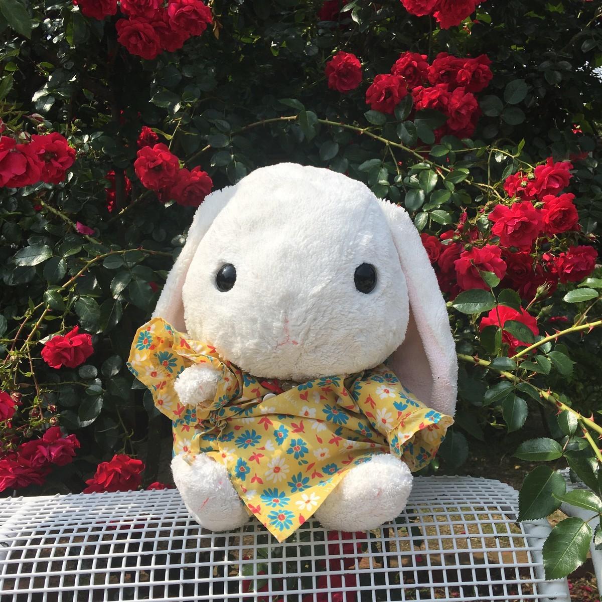 バラの花が咲いた!