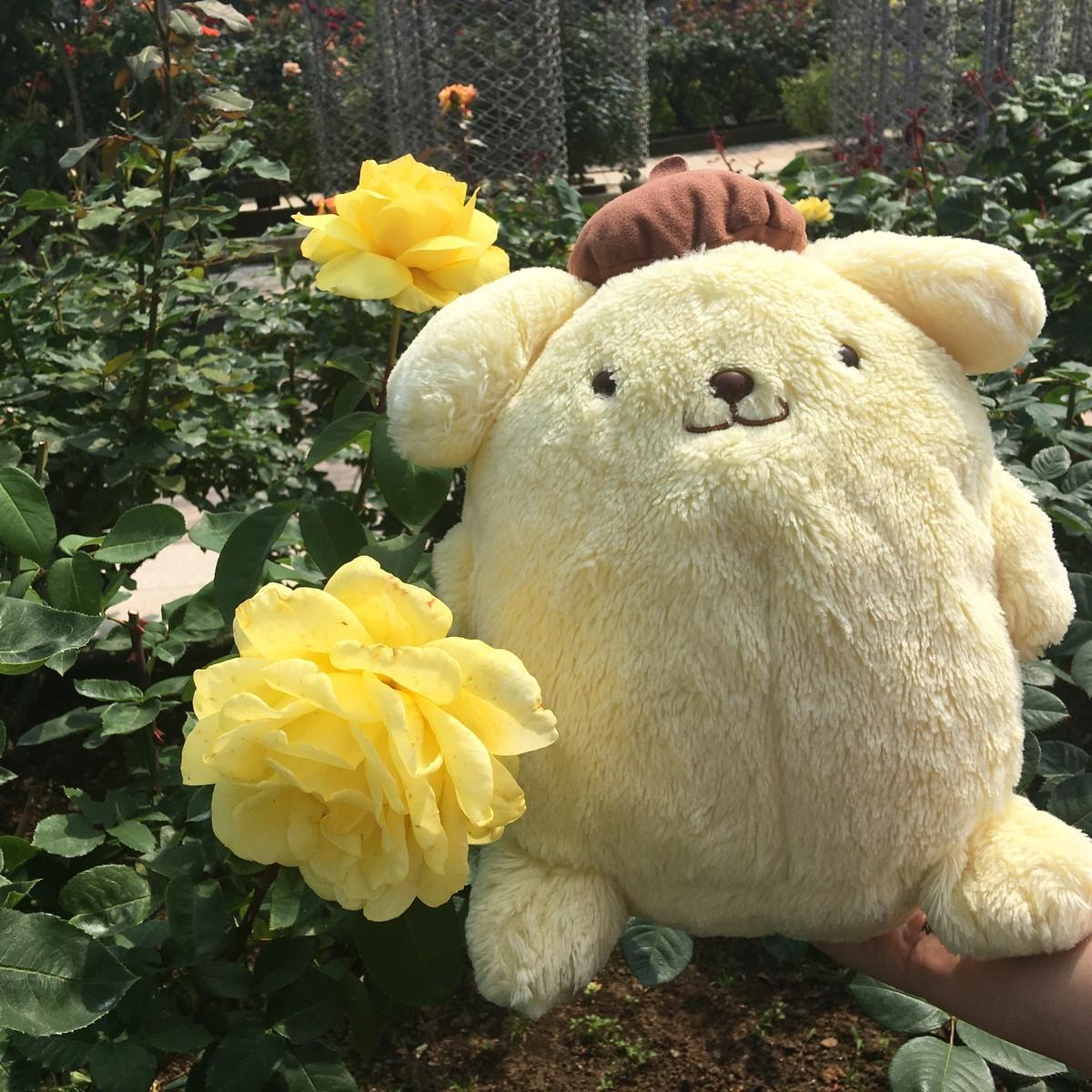 君はバラより美しい