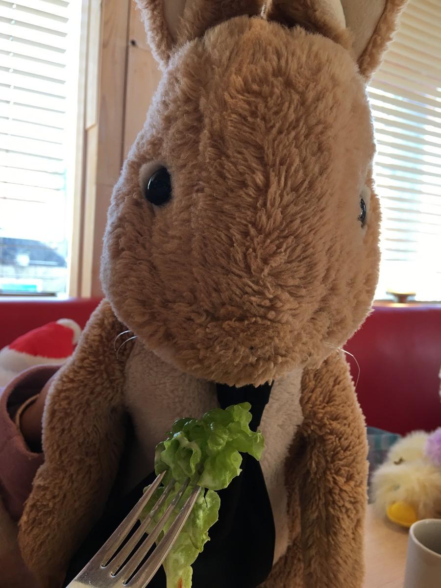 サラダのお野菜