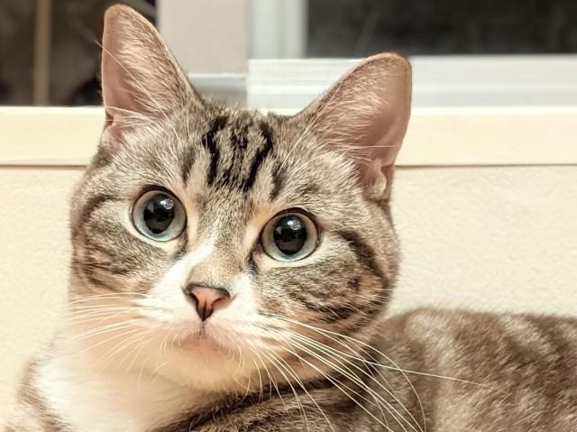 ツイッターで話題の現場猫とは?電話猫が仕事猫に変身!「