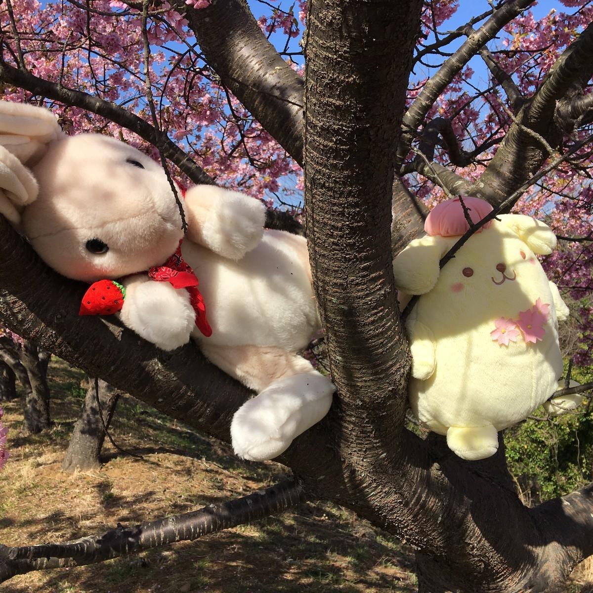 桜の木でお昼寝
