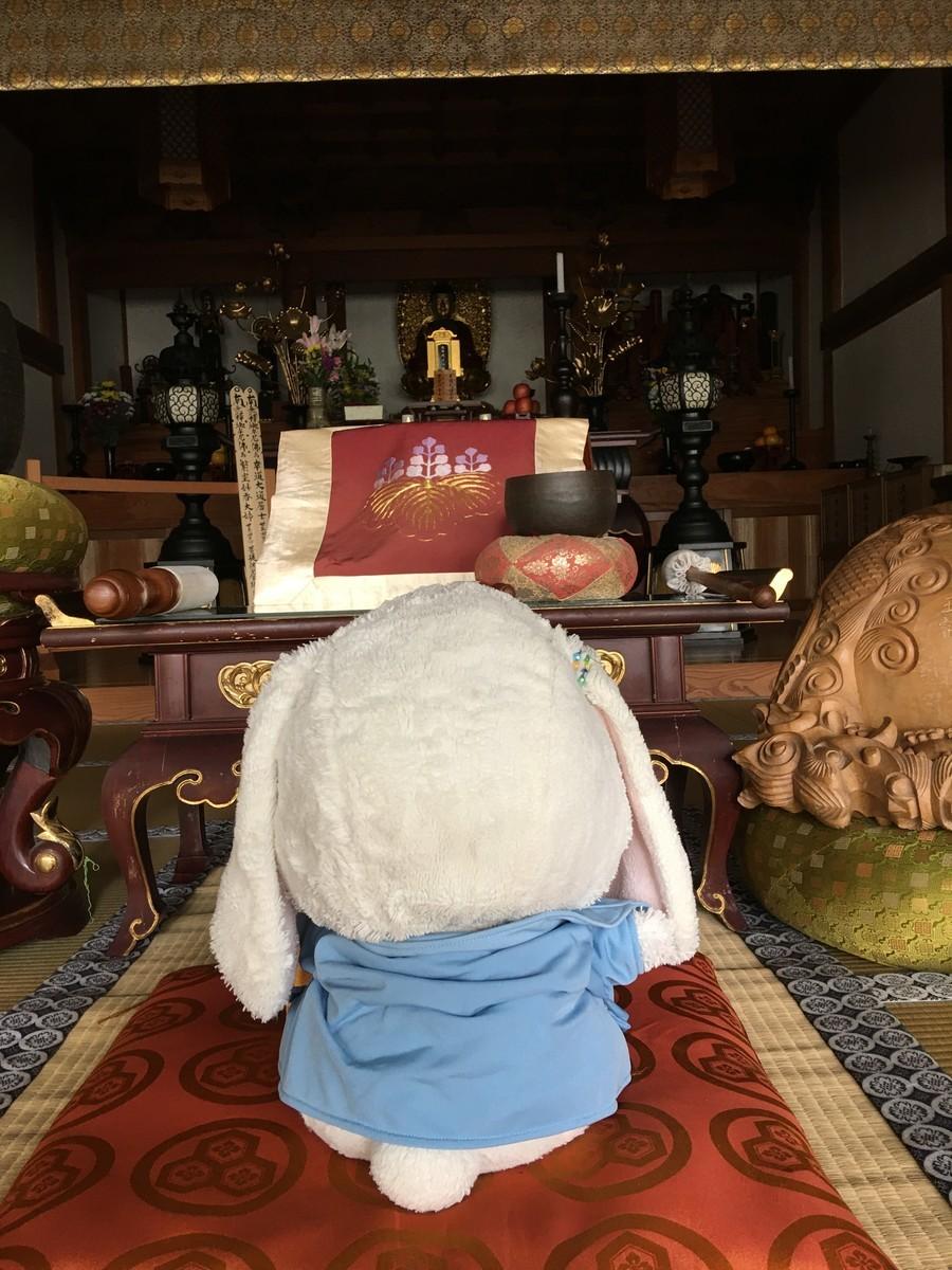 お寺で春二番を待つうさ次郎