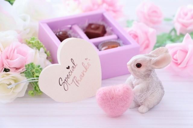 3月3日はウサギの日!