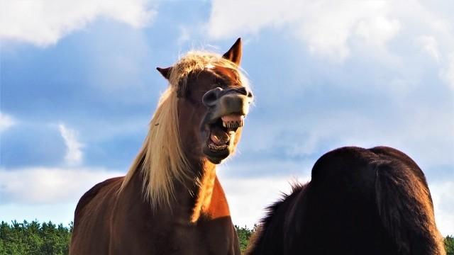 基本的馬権の画像がTwitterで話題!