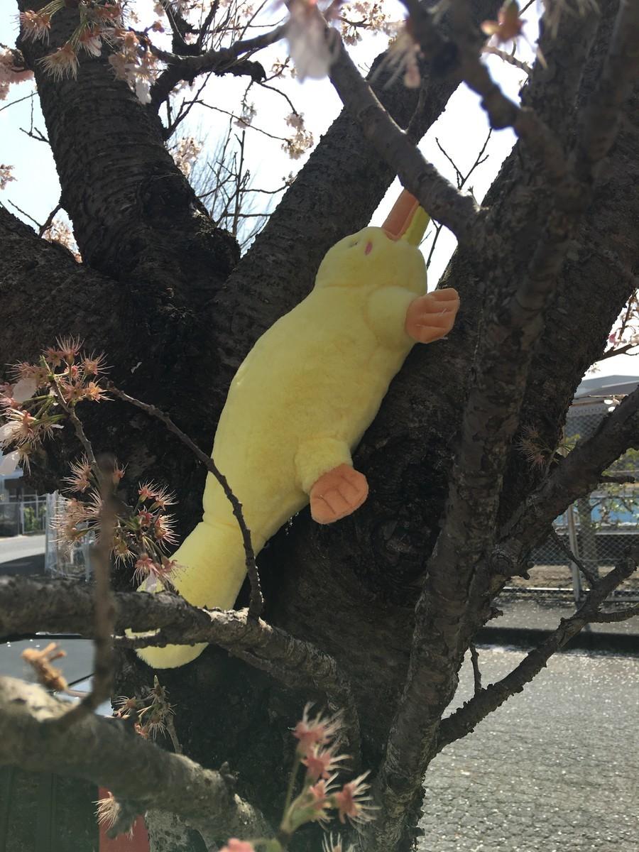 木に登るカモノハシ