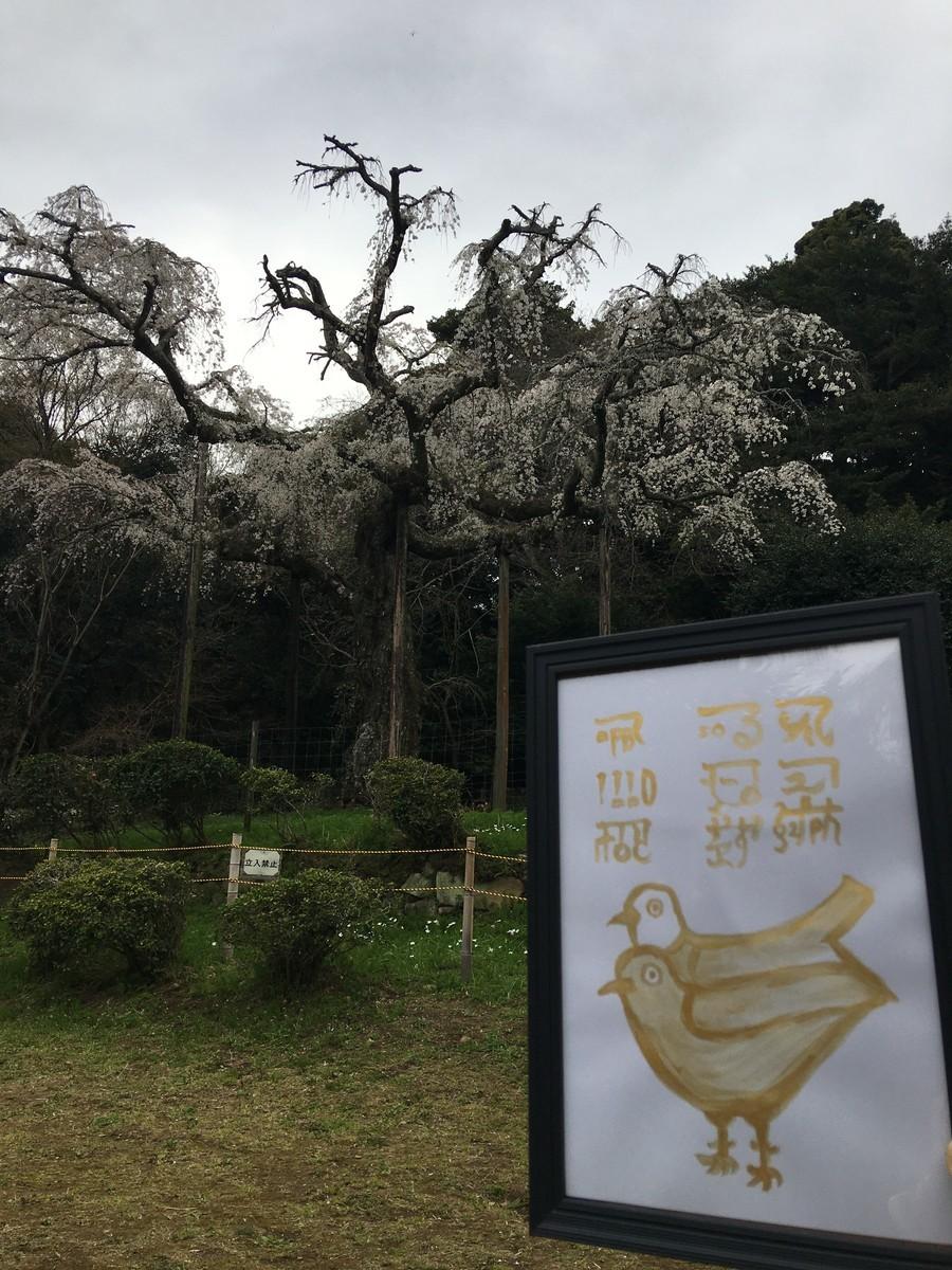 桜とお鳥さんの絵