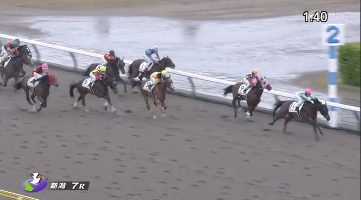 新潟7RJRA史上初の女性ジョッキー1着から3着入賞!ワン・ツー・スリー!