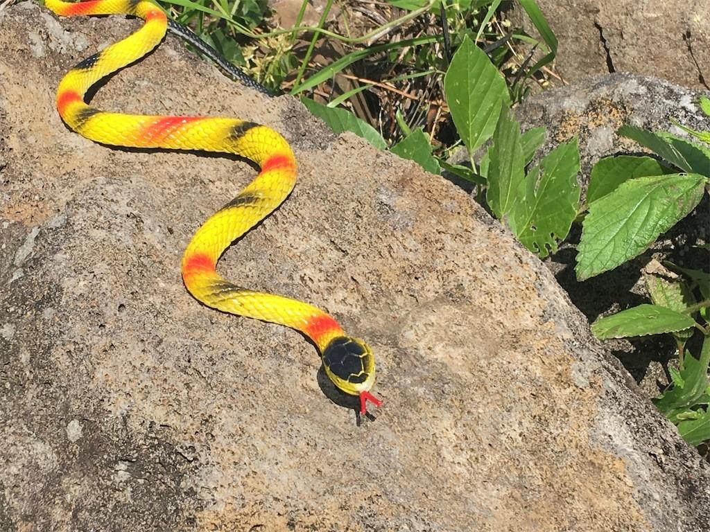横浜戸塚区アミメニシキヘビ発見場所。捕獲の瞬間