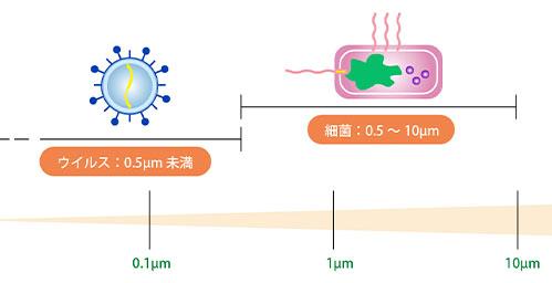 細菌とウィルスの大きさの違い