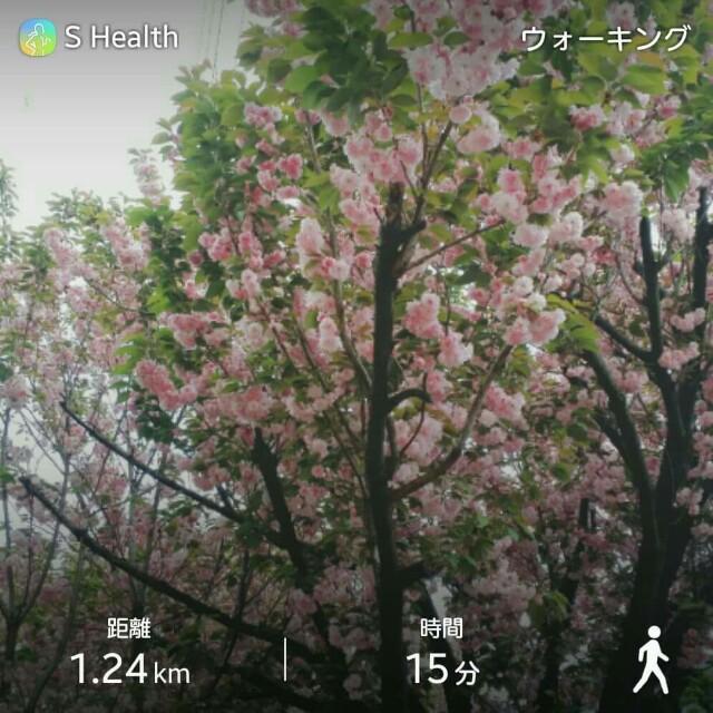 f:id:taebo0721:20170428184354j:image