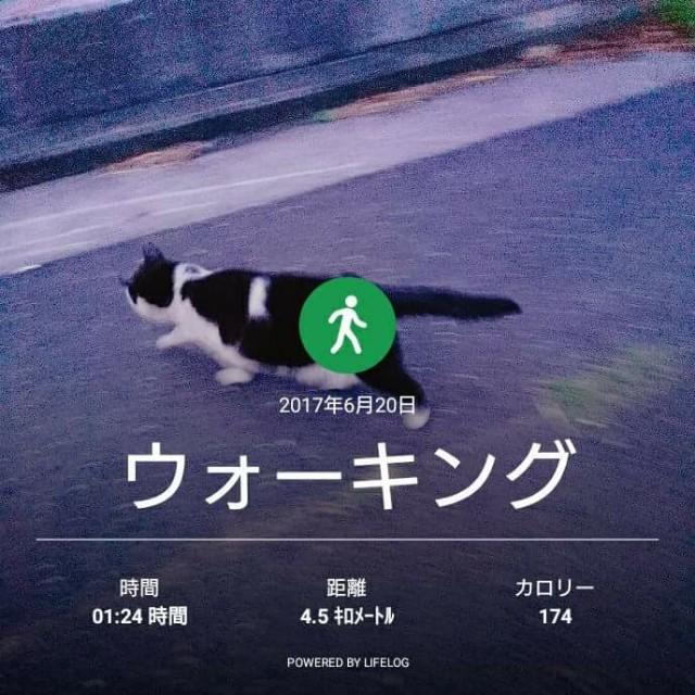 f:id:taebo0721:20170621172946j:image