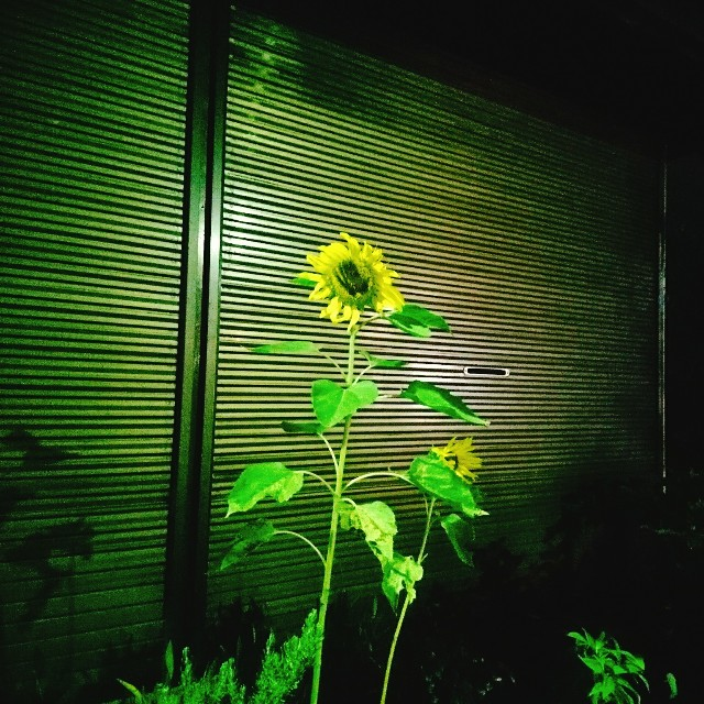 f:id:taebo0721:20170701160350j:image