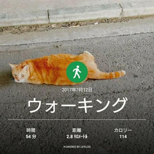 f:id:taebo0721:20170713130109j:image