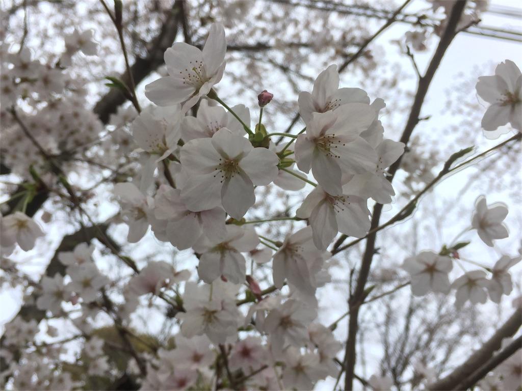 f:id:tagosaku_D_54:20170406011343j:image