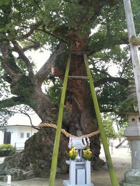 楠の大木その2
