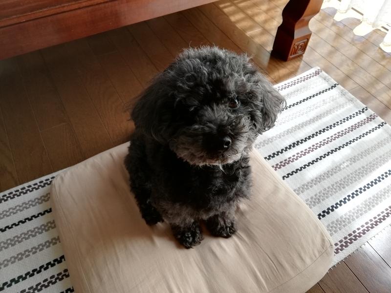 HUAWEI P20liteで犬を撮影した画像