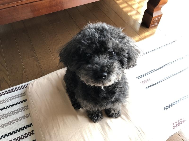 iPhoneXで犬を撮影した画像