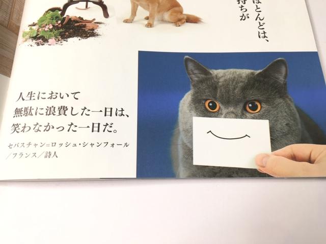 猫に人生をささやかれます・・(*'∀')