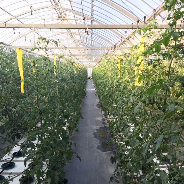 トマトファーム西農園!