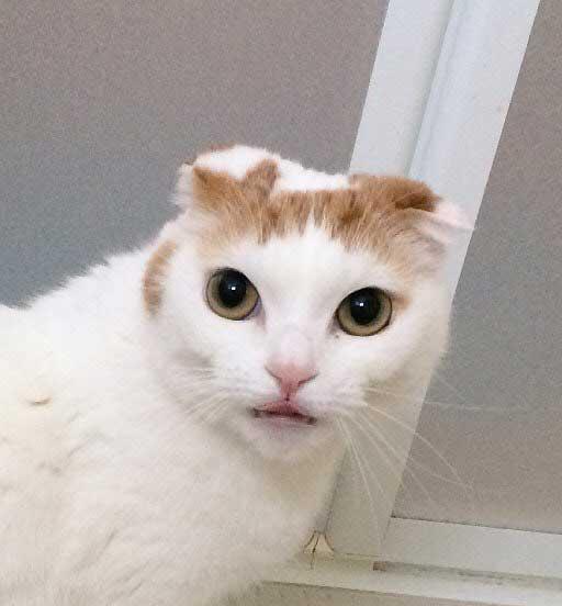 f:id:taicho-fujiyama:20180511140419j:plain