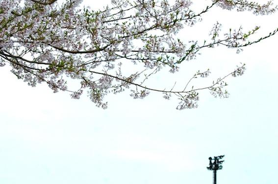f:id:taikotodasuzuki:20130429145858j:plain