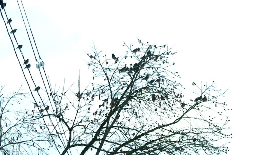 f:id:taikotodasuzuki:20150112123441j:plain