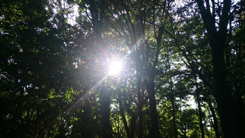 [風景][自然][森林]