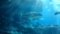 [生物][水中生物]