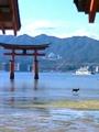 [旅行]宮島:水浴び鹿ヽ(ゝω・)ノ