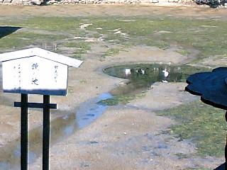 宮島:鏡の池、だったかな…鳥 ヽ(ゝω・)ノ