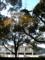 木 平和公園付近