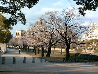 桜 平和公園付近