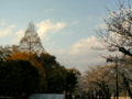 [旅行]桜と紅葉 平和公園付近 見えなさげ