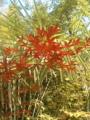 [plant]6月の赤