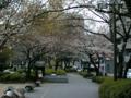 桜とカラスこわい(`・ω・´)