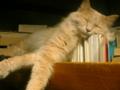 [cat](´-ω-`)