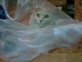 [cat]何故かビニール袋でくつろぐぬこ