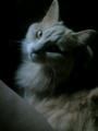 [cat]椅子ねこ