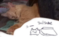 [cat]コタツから上半身だけ出した猫。色々伏せる下方